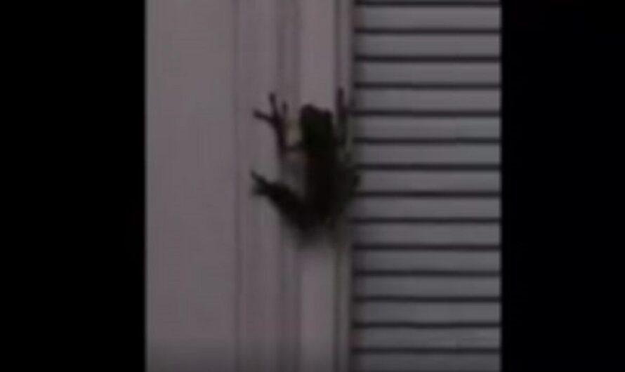 Viral: rana se comió una luciérnaga y comenzó a brillar en la oscuridad [VIDEO]