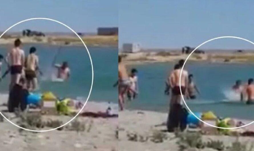 Duras imágenes de maltrato animal: golpearon a una foca y la dejaron inconsciente para sacarse fotos