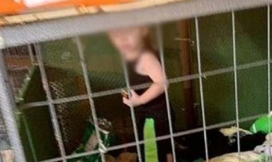 Horror: matrimonio mantenía enjaulado a su bebe de 18 meses rodeado de 600 animales