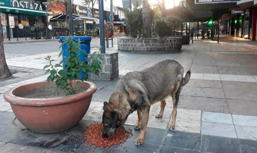 La Municipalidad de Carlos Paz se encarga de alimentar a los perros callejeros