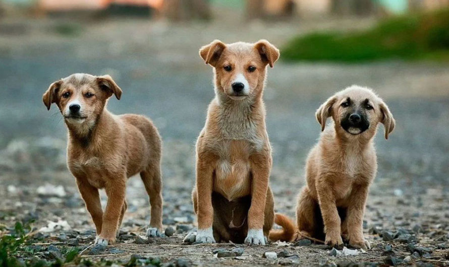 ¿Por qué se celebra hoy el Día Nacional del Perro?