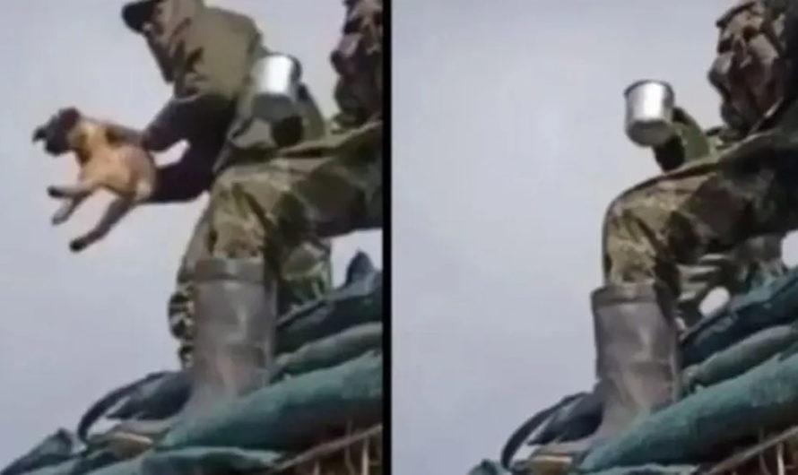 Maltrato animal: Un soldado colombiano lanza al vacío a un perro y se ríe al verlo estrellarse contra el suelo