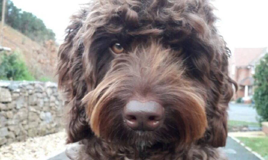 Tremendo: un perro salvó a una mujer que intentaba quitarse la vida