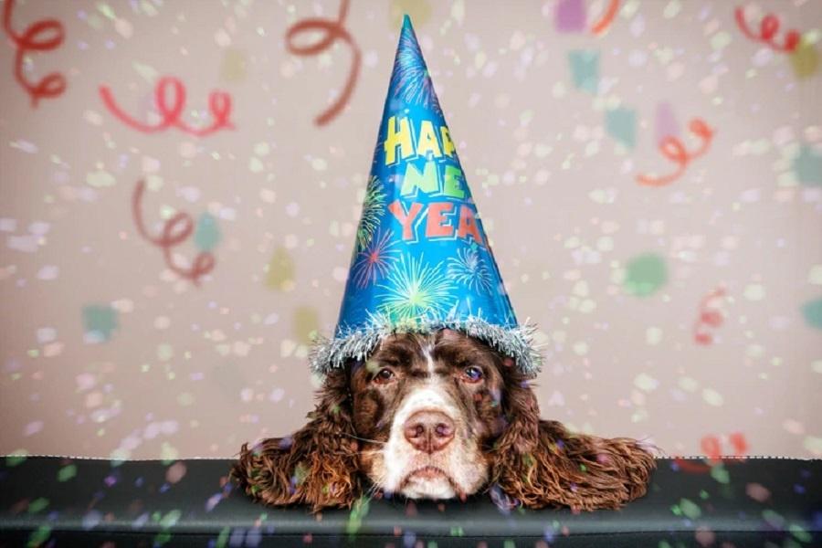 No más mitos: mirá cómo se calcula la edad humana de tu perro