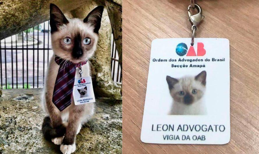 Presentaron quejas de un gatito deambulando y la empresa lo contrató