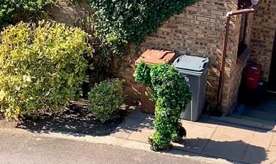 Se disfrazó de arbusto para romper la cuarentena