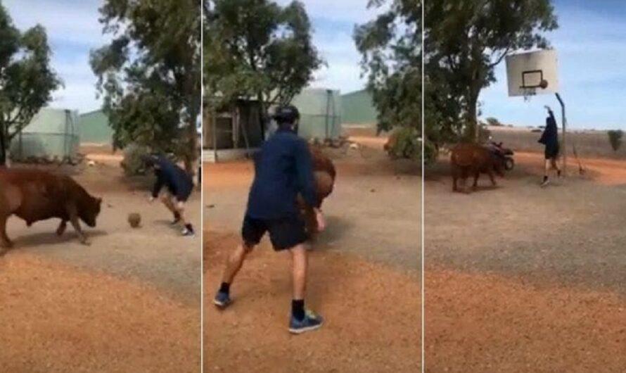 """Conocé a """"Coco"""", el toro que juega al básquet y es furor en redes [VIDEO]"""